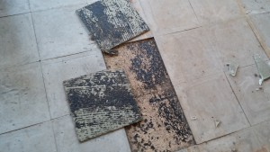 Typical asbetsos floor tile and black adhesive